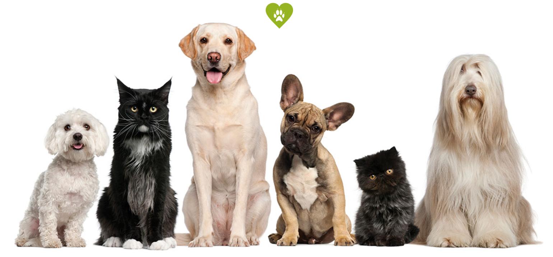 Süße Gruppe von Hunden und Katzen.